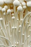 Enoki Mushrooms botanical print by Andy Phillipson