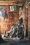 Evening in the Tool Shed botanical print by Danny Beath