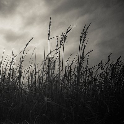 Wild Grasses I by Paul Cooklin - print