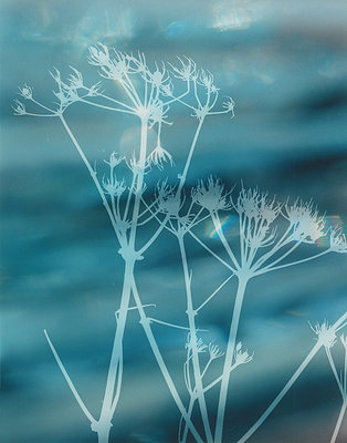 Hogweed Blur I by Ruth Garrett - print