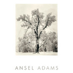 Oak Tree (embossed) by Ansel Adams - print