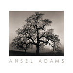 Oak Tree - Sunset City, California (embossed) by Ansel Adams - print