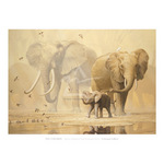 African Elephants and Namaqua Doves by Ian Coleman - framed art prints and framed pictures