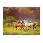 Arabians After a Storm by Jenness Cortez - framed art prints and framed pictures