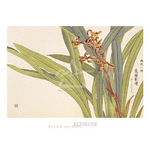 Brown Orchids by Kosikose - framed art prints and framed pictures