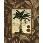 Banana Palm (Brown) by Karl Rattner - framed art prints and framed pictures