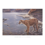 Canyon Creek- Cougar (detail) by John Seerey-Lester - framed art prints and framed pictures