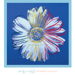 Daisy, c. 1982 (blue on blue) by Andy Warhol - print