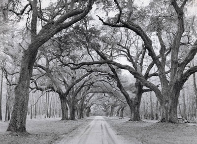Oak Arches Poster Art Print by Jim Morris