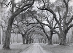 Fine Art Print of Oak Arches by Jim Morris