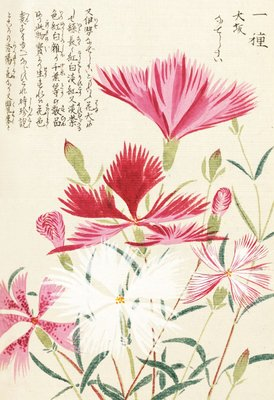 Fine Art Print of Honzo Zufu [Carnations] by Kan'en Iwasaki