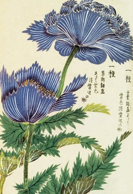 Honzo Zufu [Blue Flower] botanical print by Kan'en Iwasaki