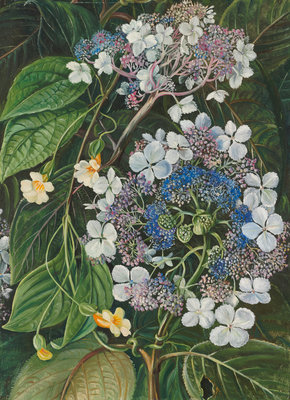 273. Flowers of Darjeeling, India. Poster Art Print by Marianne North