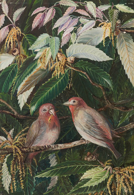 282. A. Himalayan Oak and Birds, Nainee Tal, India. Poster Art Print by Marianne North