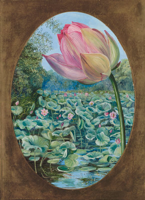 294. The Sacred Lotus or Pudma. Poster Art Print by Marianne North