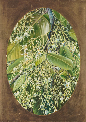 296. Flowers of Sal. Poster Art Print by Marianne North