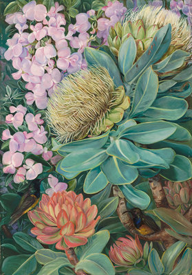 429. Flowers of the Wagenboom and a Podalyria, and Honeysuckers. Poster Art Print by Marianne North