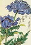 Honzo Zufu [Blue Flower]