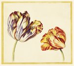 Fine Art Print of Tulips by Simon Verelst