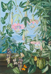 13. Two Climbing Plants of Chili and Butterflies. Poster Art Print by Marianne North