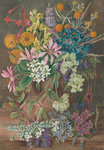 16. Wild Flowers of Chanleon, Chili botanical print by Marianne North