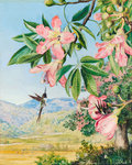 97. Foliage and Flowers of a Coral tree and double-crested Humming Birds, Brazil. botanical print by Marianne North