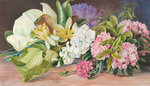 199. Flowers of North American Trees and Shrubs. botanical print by Marianne North
