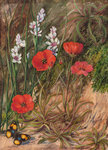 413. A South African Sundew and Associate. Poster Art Print by Marianne North