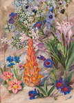 423. A Medley from Groot Post, South Africa. botanical print by Marianne North