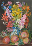 438. Wild Flowers of Ceres, South Africa. botanical print by Marianne North