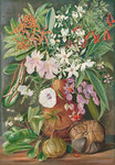 498. A Selection of Flowers. Wild and Cultivated, with Puzzle Nut, Mahe. botanical print by Marianne North