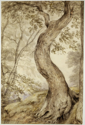 Tree at Helmingham, c.1800 by John Constable - print