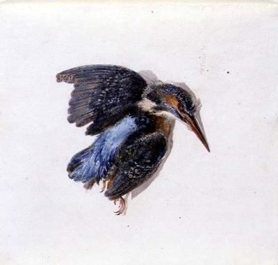 Kingfisher, from The Farnley Book of Birds, c.1816 by Joseph Mallord William Turner - print