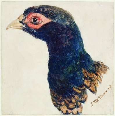 Cock Pheasant, The Farnley Book of Birds, c.1816 by Joseph Mallord William Turner - print