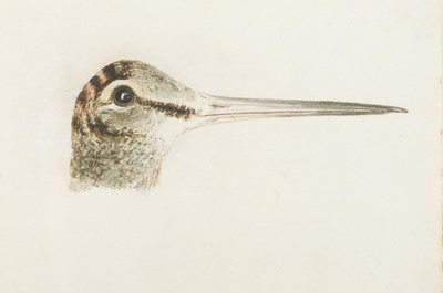 Woodcock, from The Farnley Book of Birds, c.1816 by Joseph Mallord William Turner - print