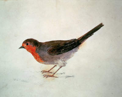 Robin, from The Farnley Book of Birds, c.1816 by Joseph Mallord William Turner - print