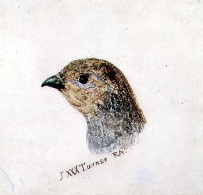 Partridge, from The Farnley Book of Birds, c.1816 by Joseph Mallord William Turner - print