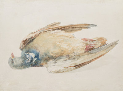 Pigeon, from The Farnley Book of Birds, c.1816 by Joseph Mallord William Turner - print