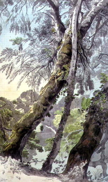 Trees Overhanging Water, 1800 by Francis Towne - print