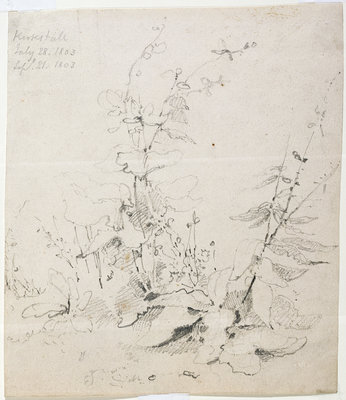 Study of Weeds, Kirkstall, 1803 by John Sell Cotman - print