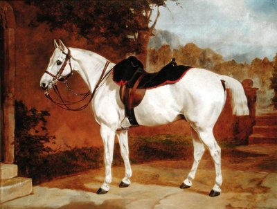 Ali, Portrait of a Horse by English School - print
