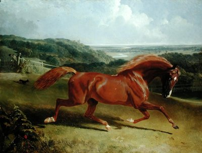 Fine Art Print of Galloping Horse in a Landscape by John Frederick Herring Snr