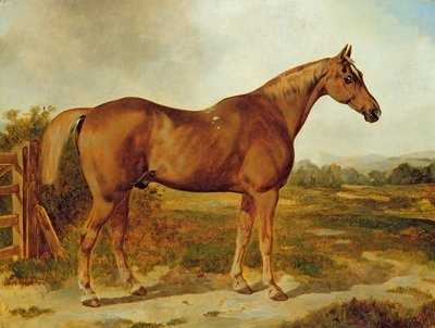 Silvertail, Portrait of a Horse by English School - print