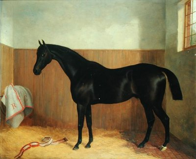 Tommy, Portrait of a Horse, c.1870s by John Paul - print