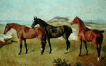 Three Horses: Whissendine, Swallow and Tiptop, 1886