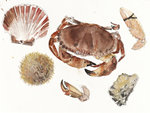Fine Art Print of Crabs and Other Shells by Elizabeth Blackadder