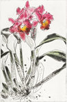 Fine Art Print of Orchid 1985 by Elizabeth Blackadder