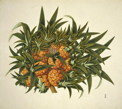Pineapple by John Reeves - print