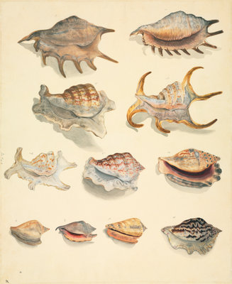 Shells (pink, spiked) by John Reeves - print