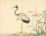 Red-crowned crane by John Reeves - print